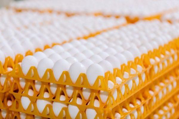 תבנית פלסטיק לביצים